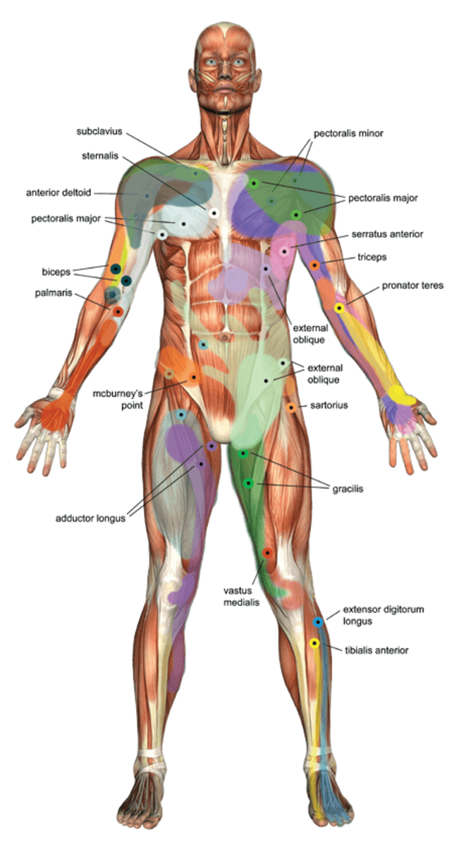 Healing benefits of pressure point massage healdove common trigger points and referral pain ccuart Images
