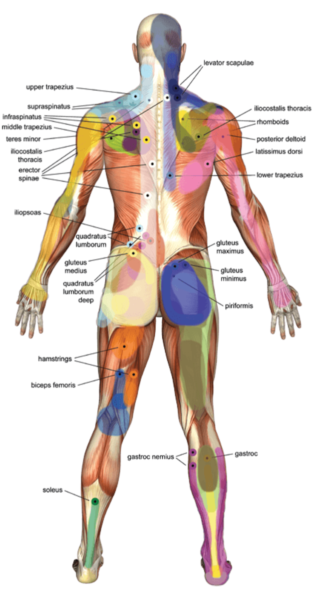 Healing Benefits Of Pressure Point Massage Remedygrove