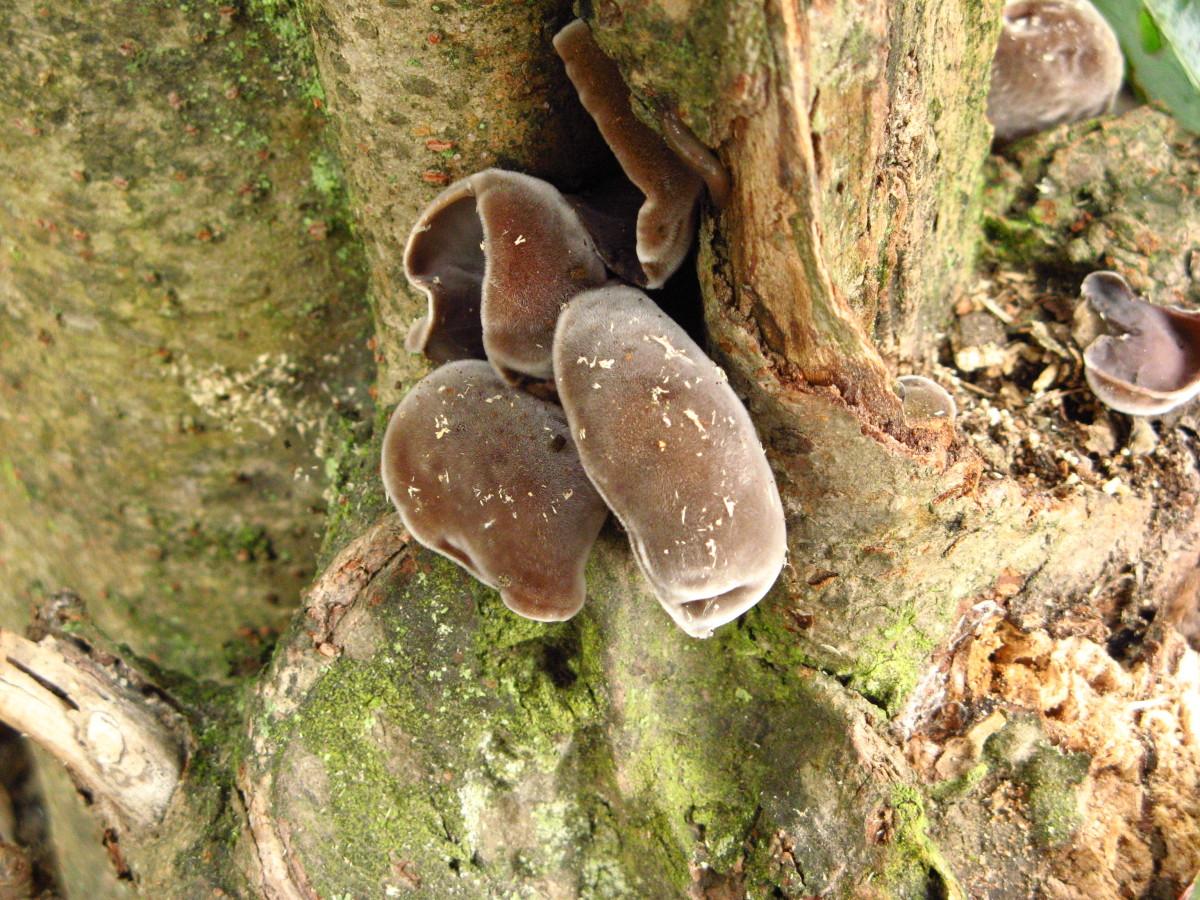 Naturally occurring black fungus.