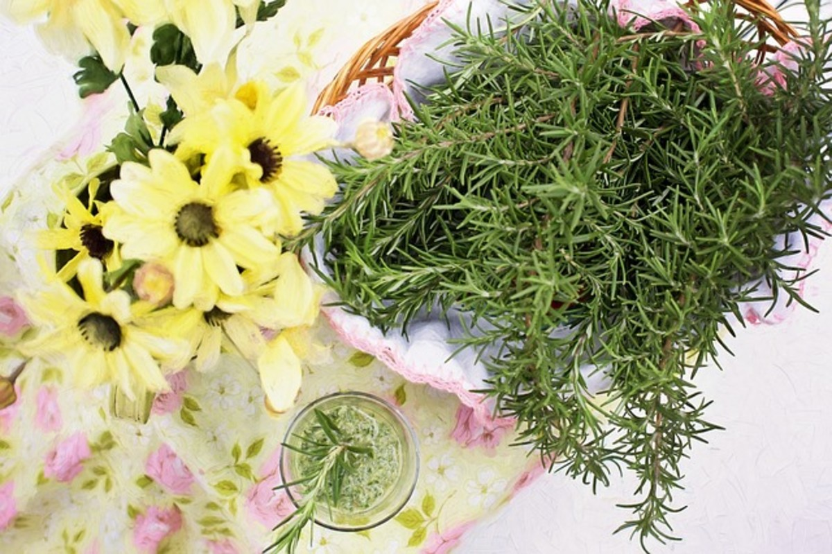 Rosemary. There is not a finer herb than rosemary!
