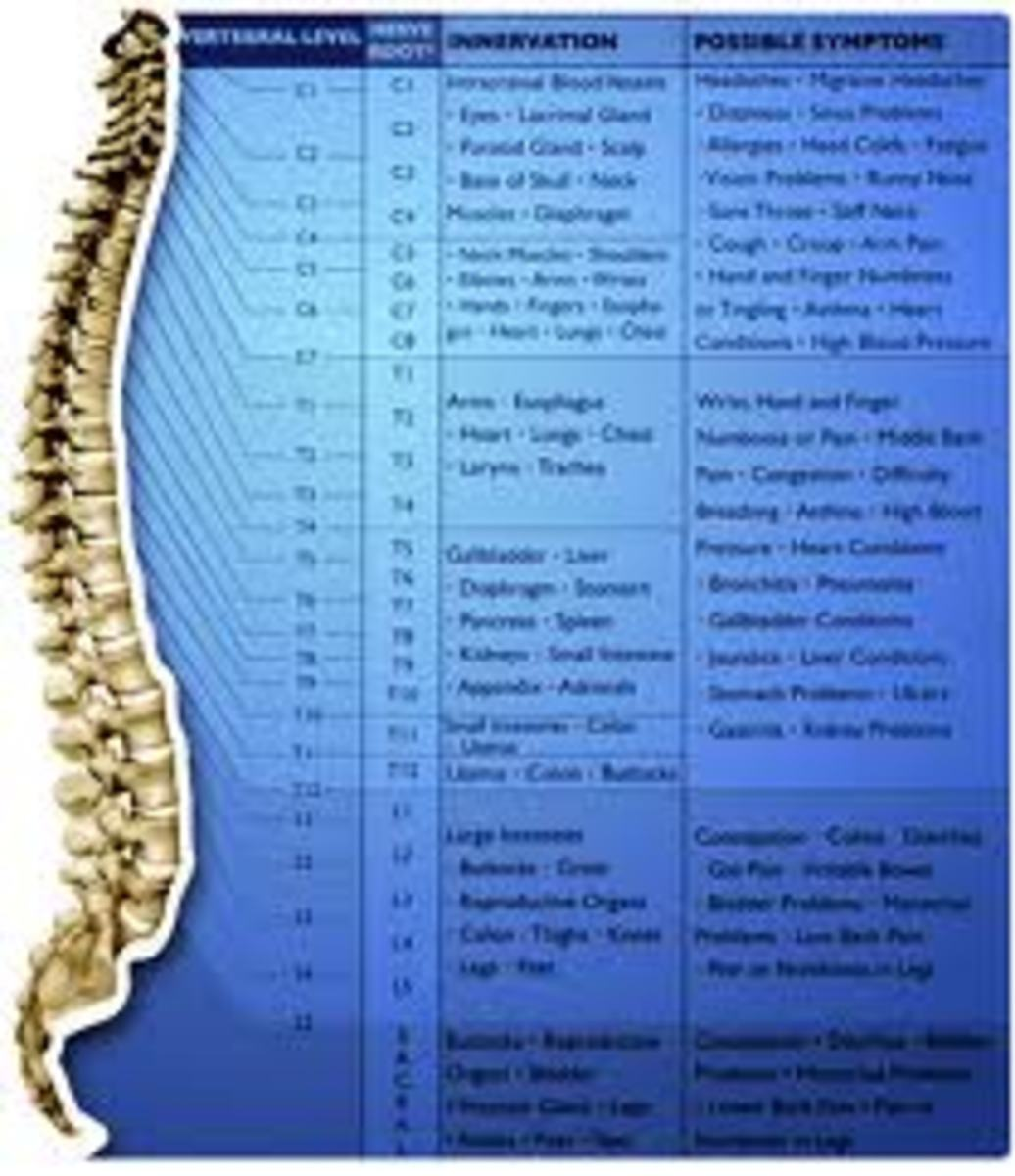 Our spine connects every nerve in our body