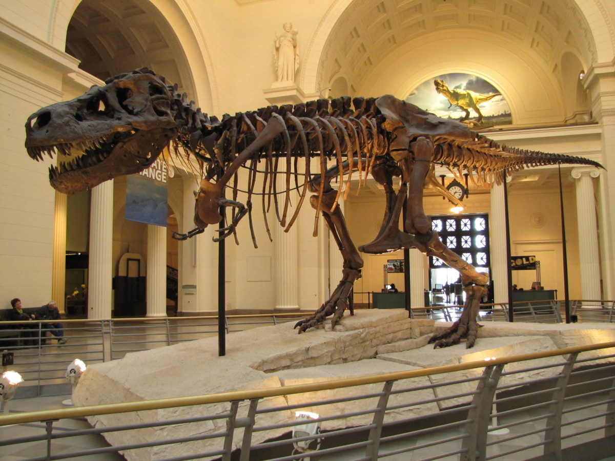 Tyrannosaurus rex Sue, Field Museum, Chicago, Illinois, U.S.