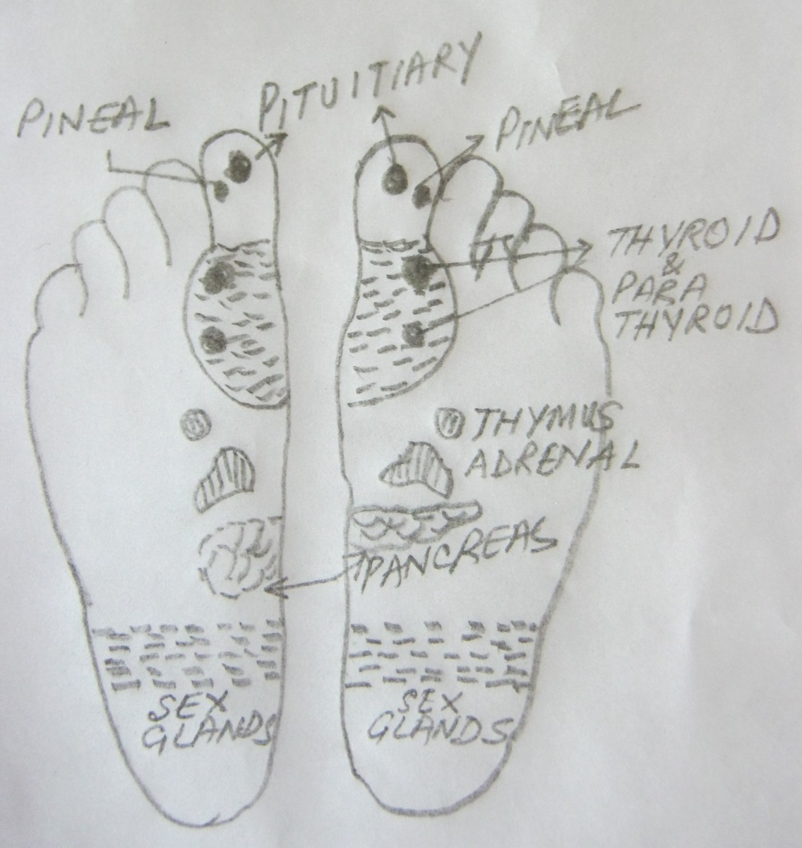 figure 13, points for endocrine glands in both feet