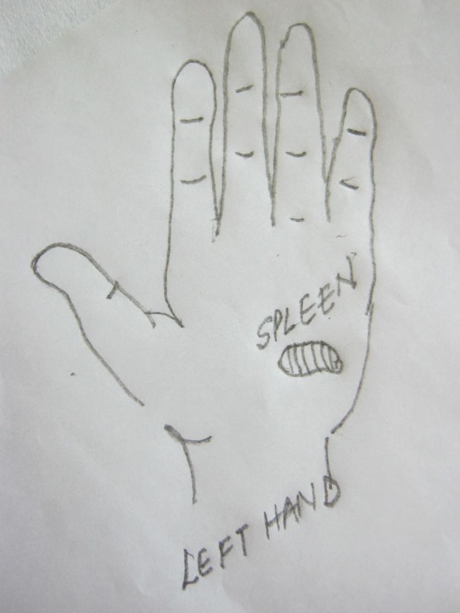 figure 11 B, pressure point for spleen in left hand only
