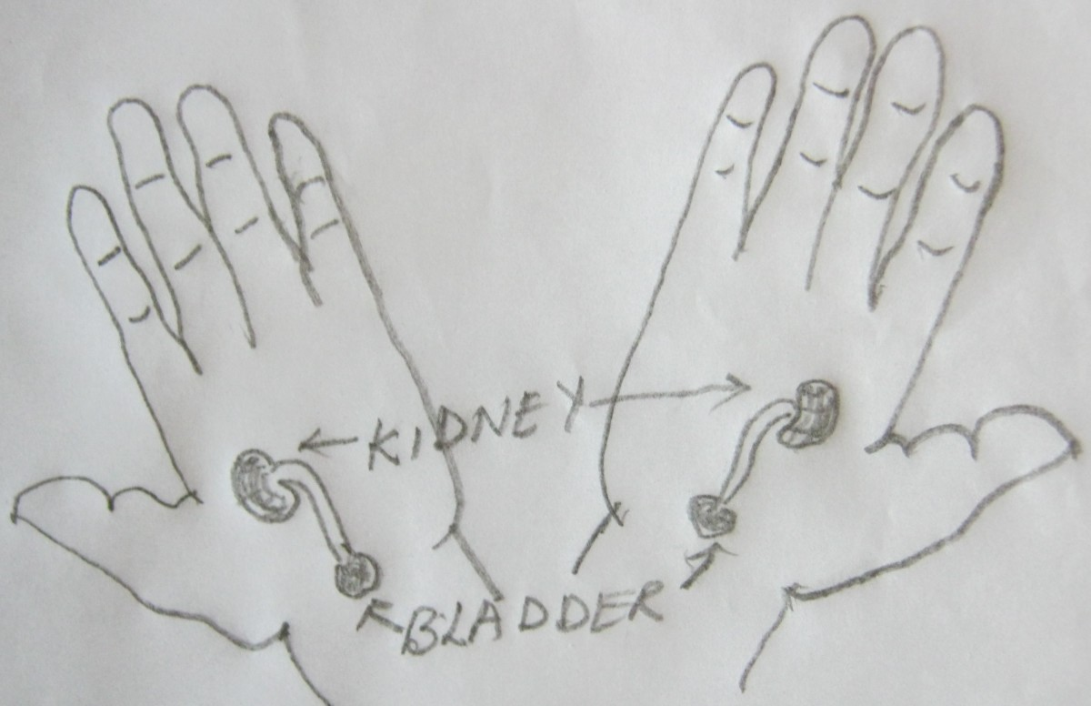 figure 12 B, kidney points in both hands