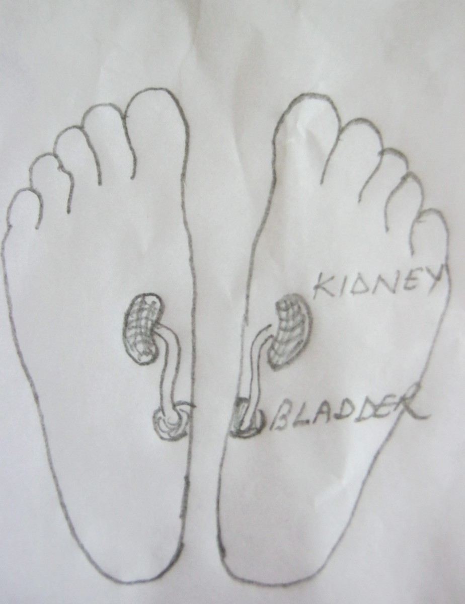 figure 12 A, kidney points in both feet