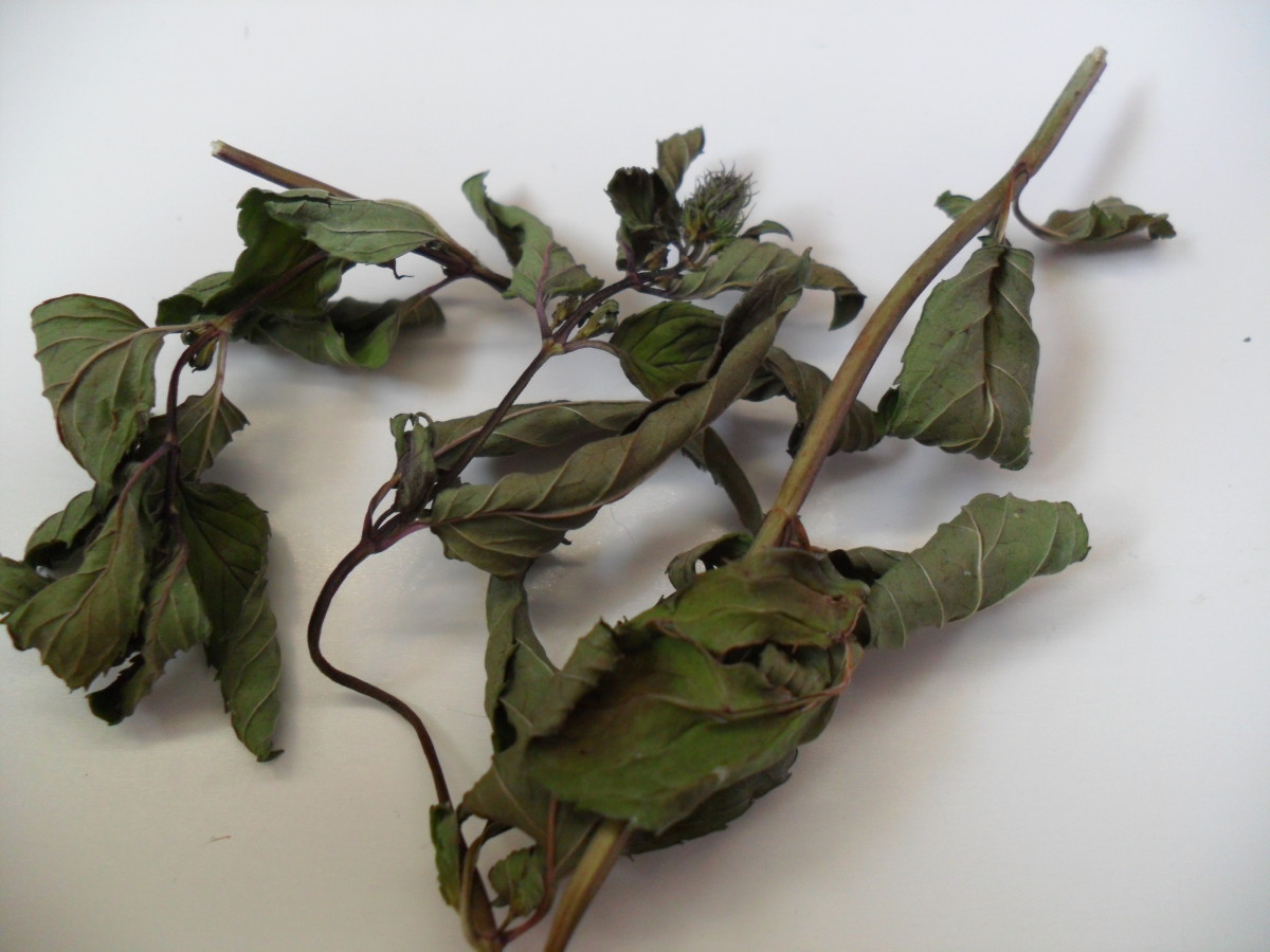 Dried mint leaves work well to help soothe  stomach pain
