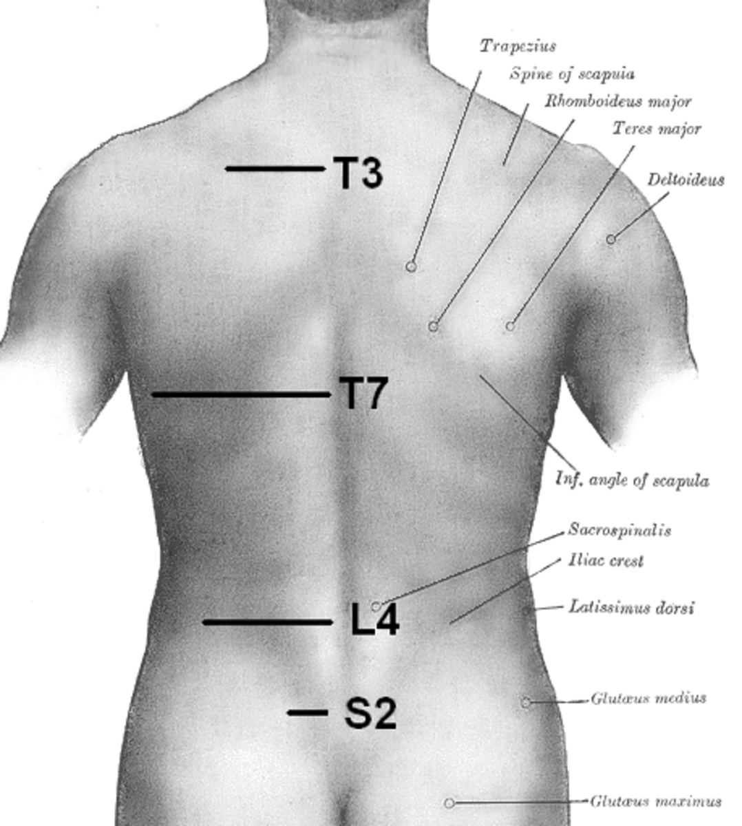 S2 is the area in which many walking muscles connect to the back of the pelvic cradle. The iliac crest is the other easily accessible spot where many muscles connect.