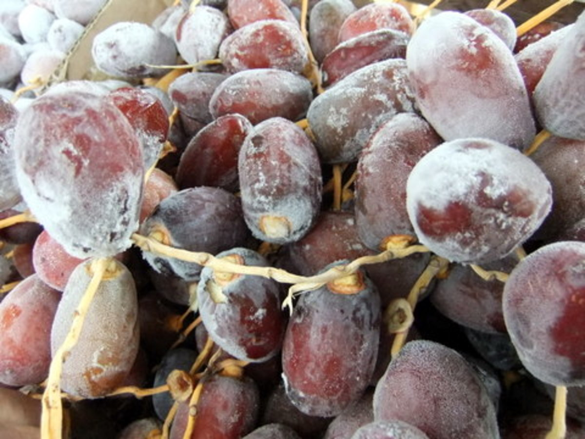 Frozen fresh dates:  They taste bitter as well as sweet which can be addictive.