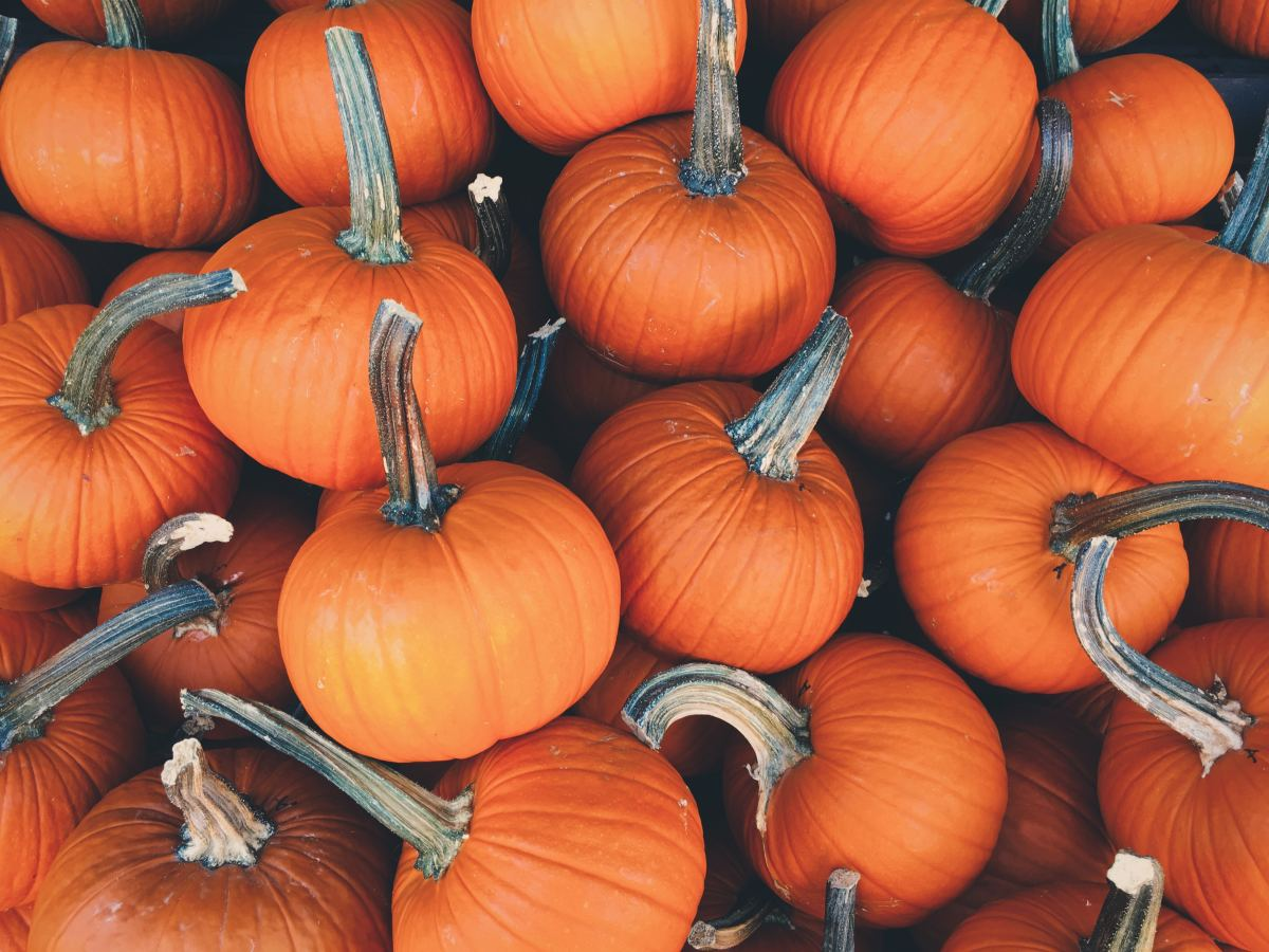 Pumpkins are another great food to incorporate into your recovery diet.