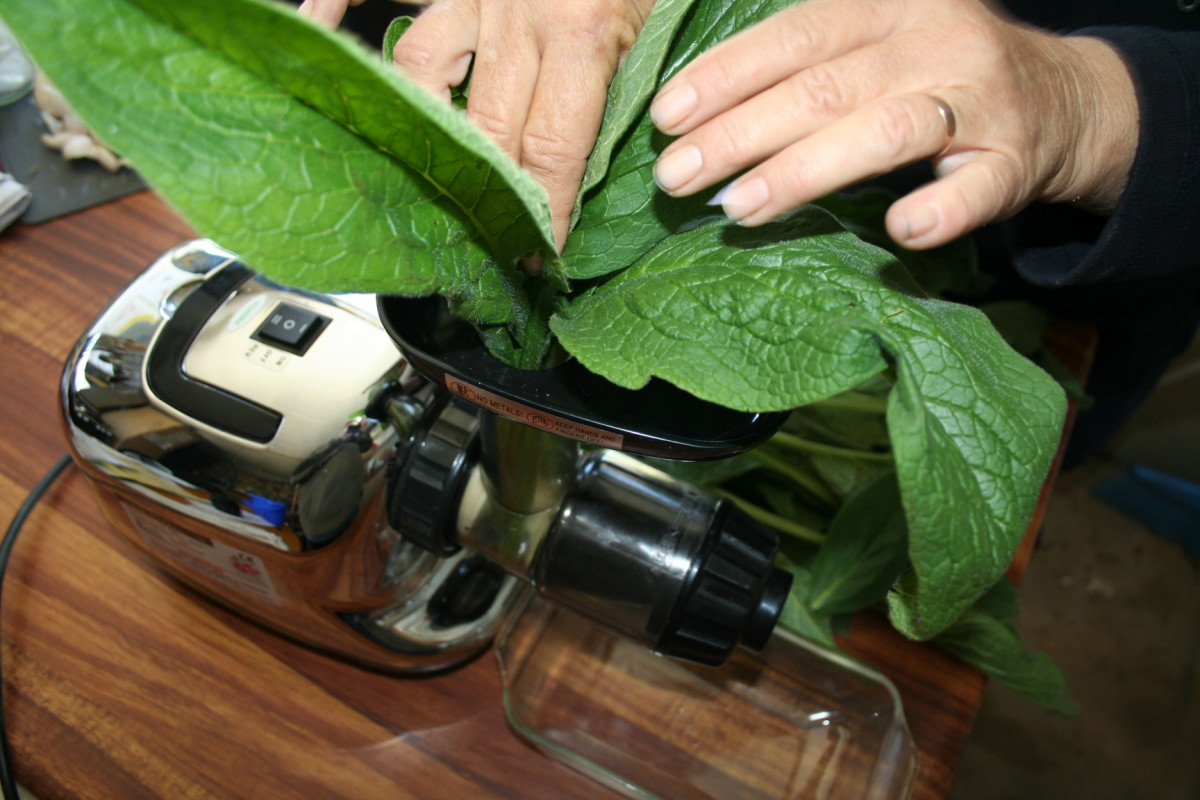 I use a cold-press juicer to crush fresh comfrey leaves when preparing a comfrey poultice.