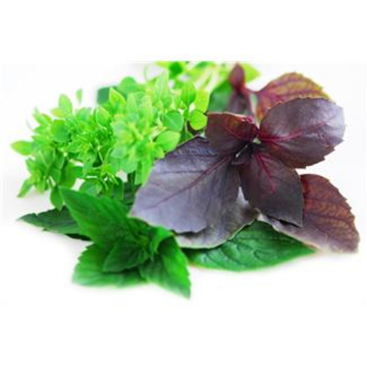Essential oils come from herbs like peppermint, basil, and thyme.