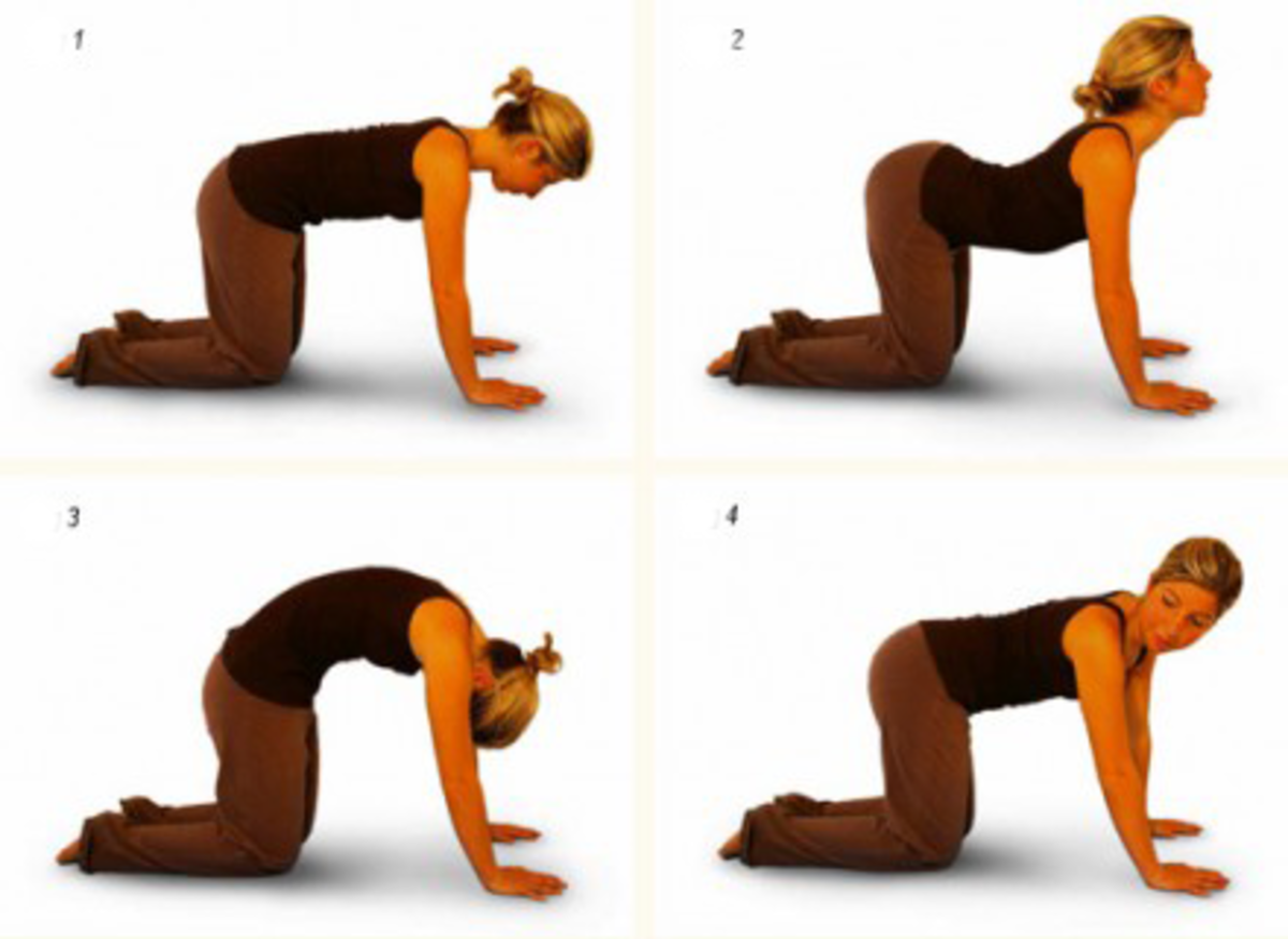 The cat-cow exercise