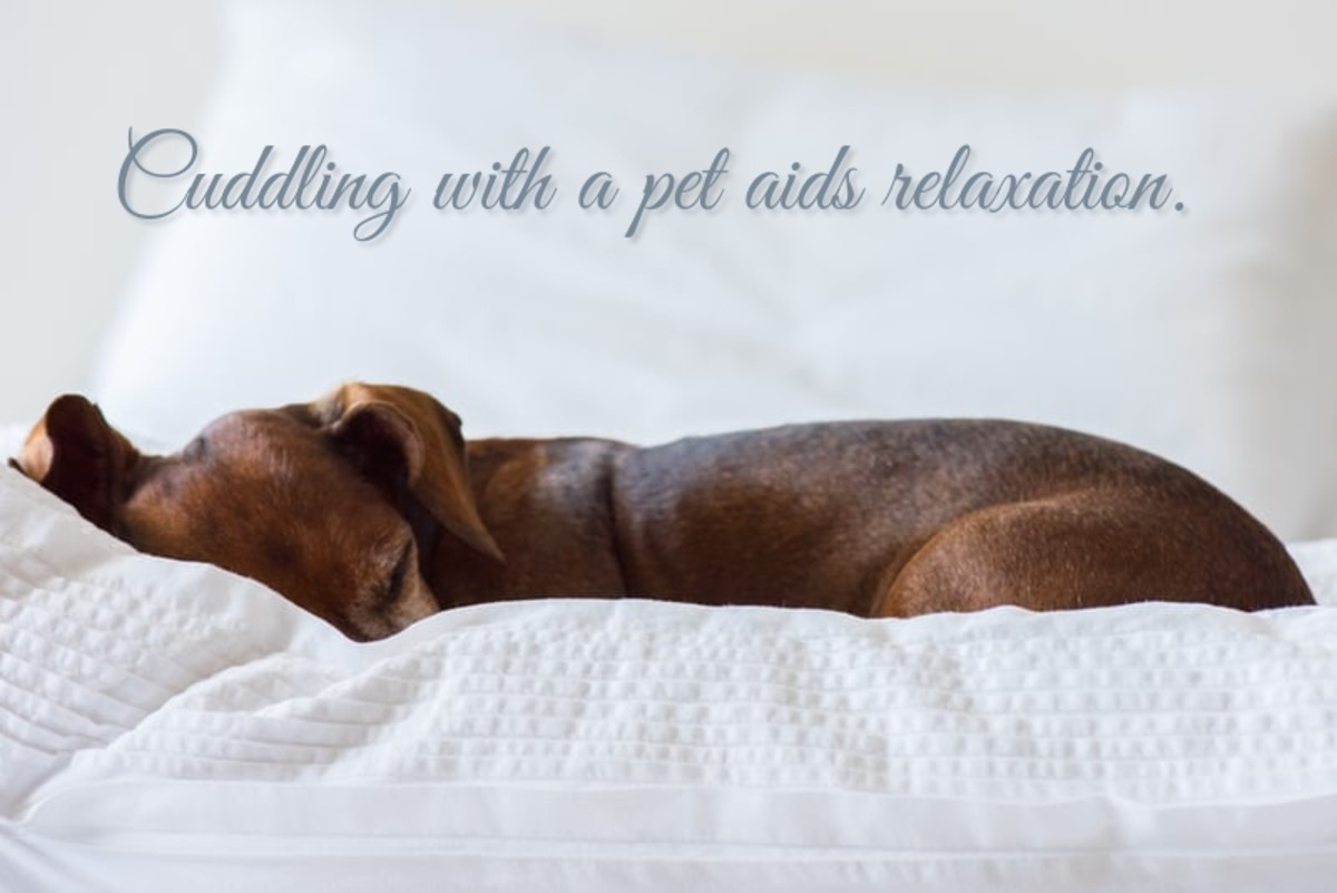 Cuddling with pets aids relaxation. Photo by Eduardo C.G.