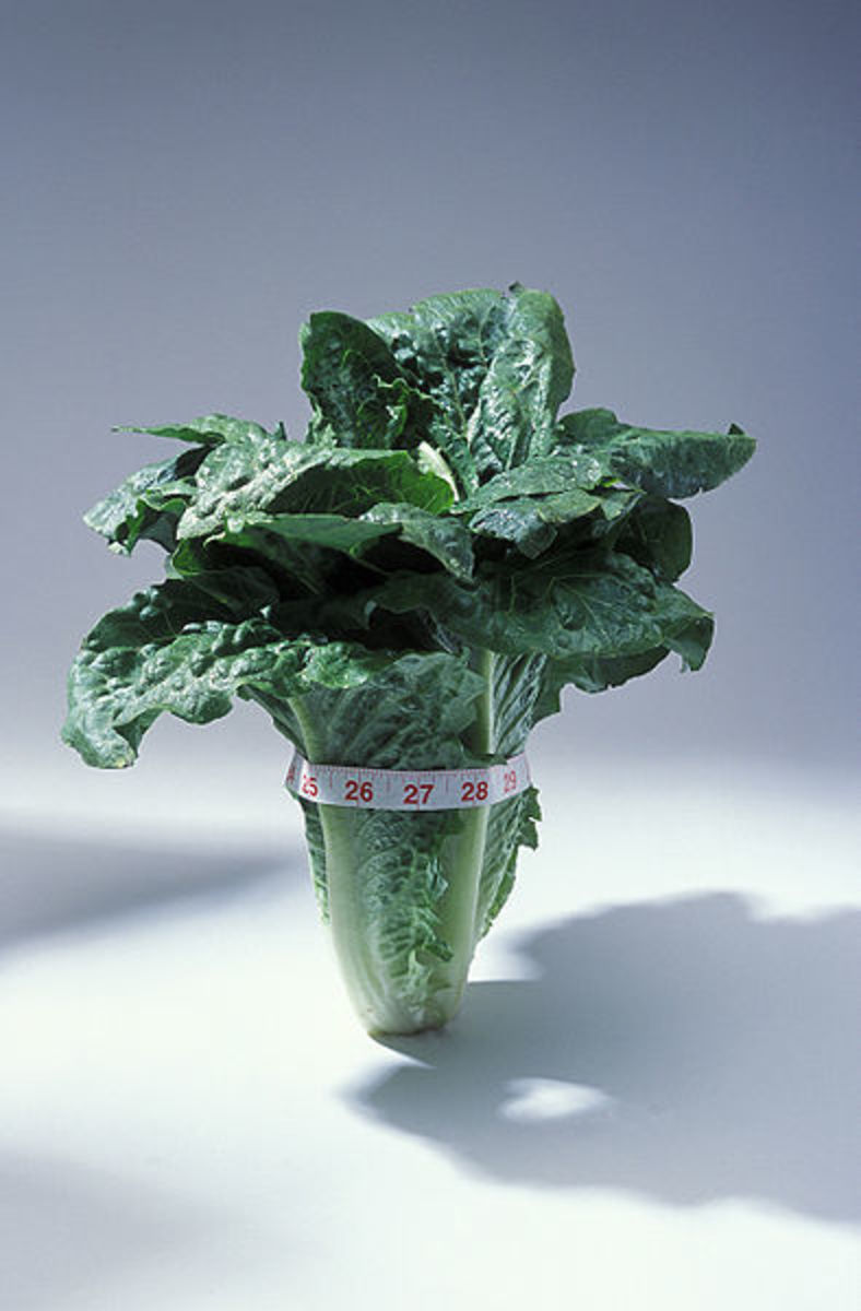 Leafy Green Vegetables slow the rate of cognitive decline.
