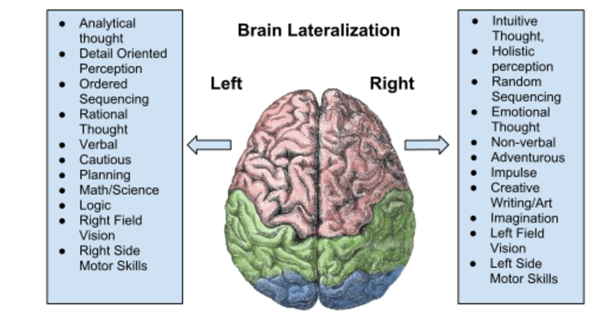Functions of the Left and Right Hemispheres of the Brain