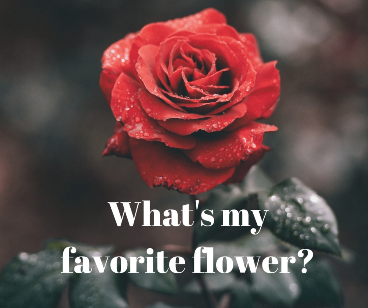 Are raindrops on roses some of your favorite things?