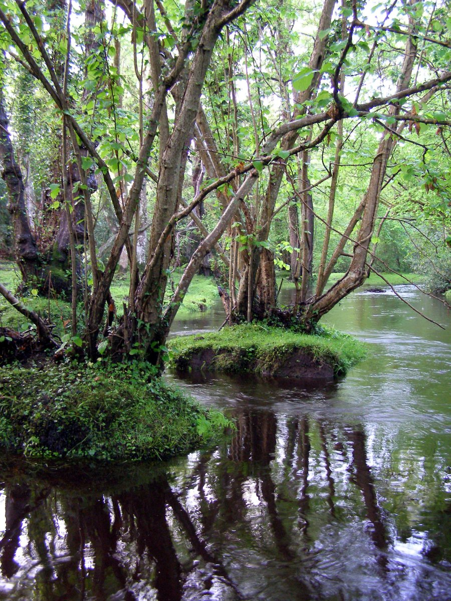 New Forest of southern England, the inspiration for the forest of the original series.