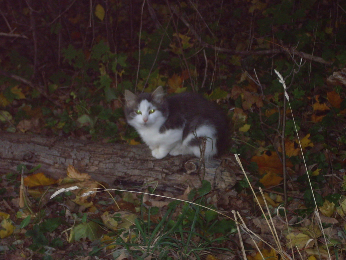 Feral cats already live on the streets and in the woods, making the book's plot attractive.