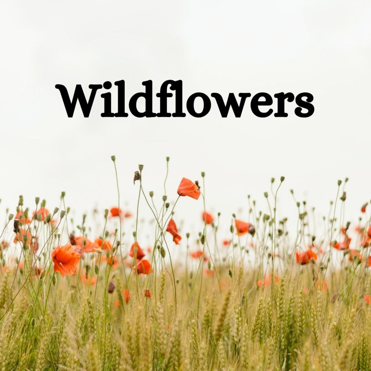 Wildflowers—you can collect them for free, and they're beautiful!