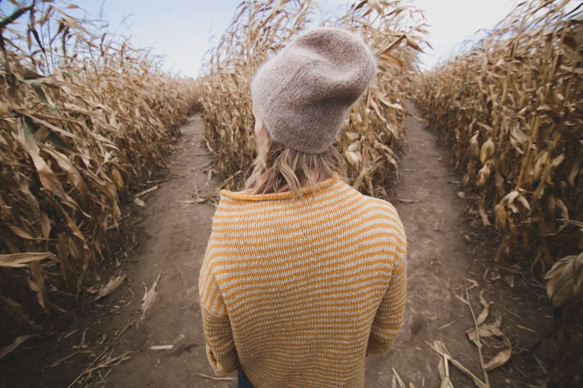 Have you ever gotten lost in a corn maze?