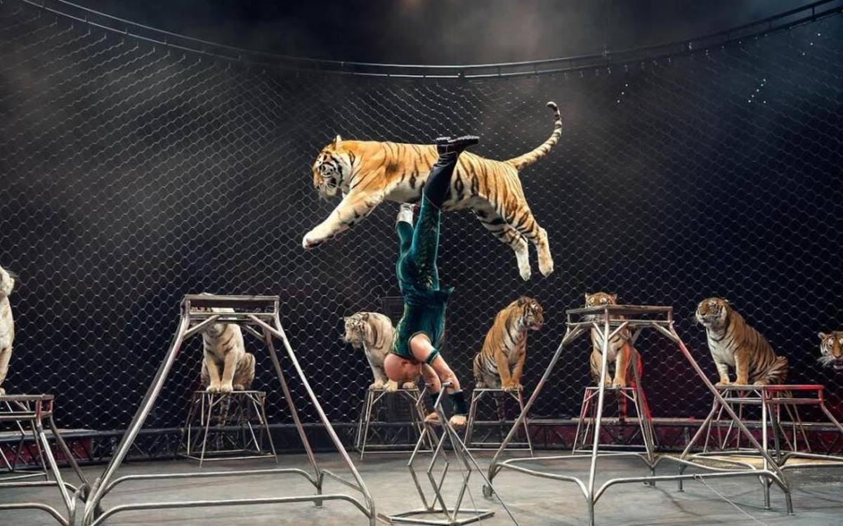 Leaping tigers!