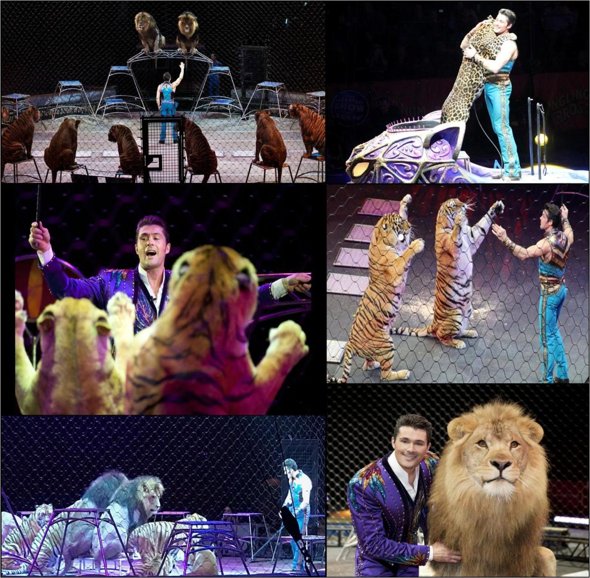 Animal Trainer Alexander Lacey's Ringling Bros. Circus Wrap-Up.     (2012-2017)