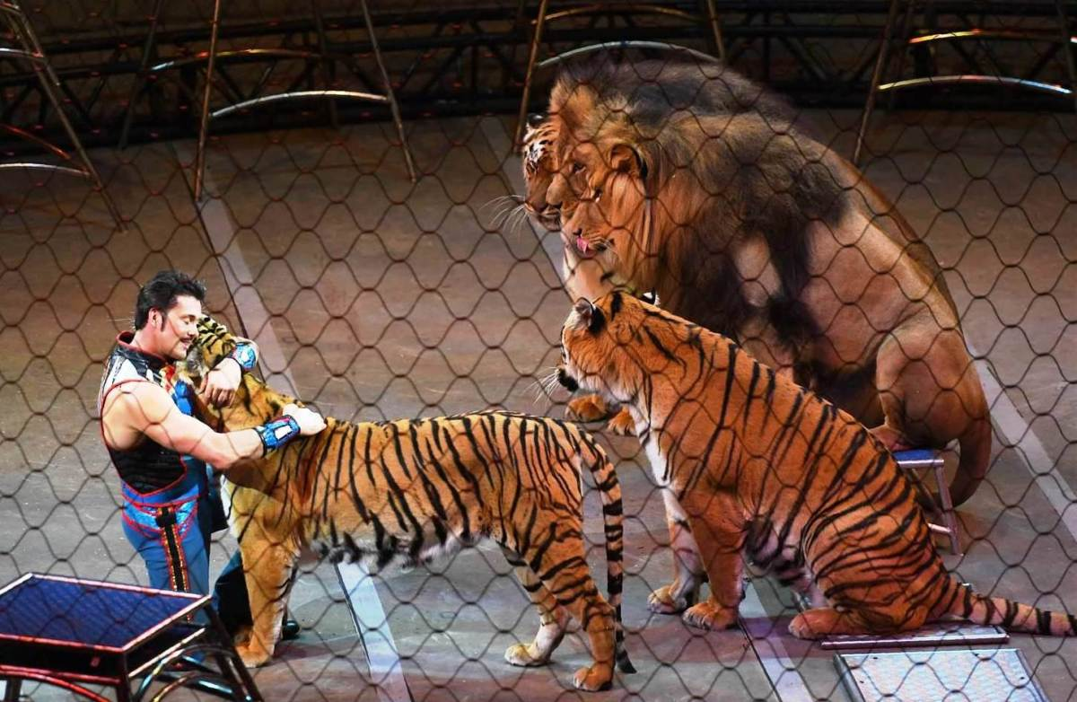 Alexander Lacey and his affectionate felines. Ringling Bros. and Barnum & Bailey presents Out Of This World (2016-2017)