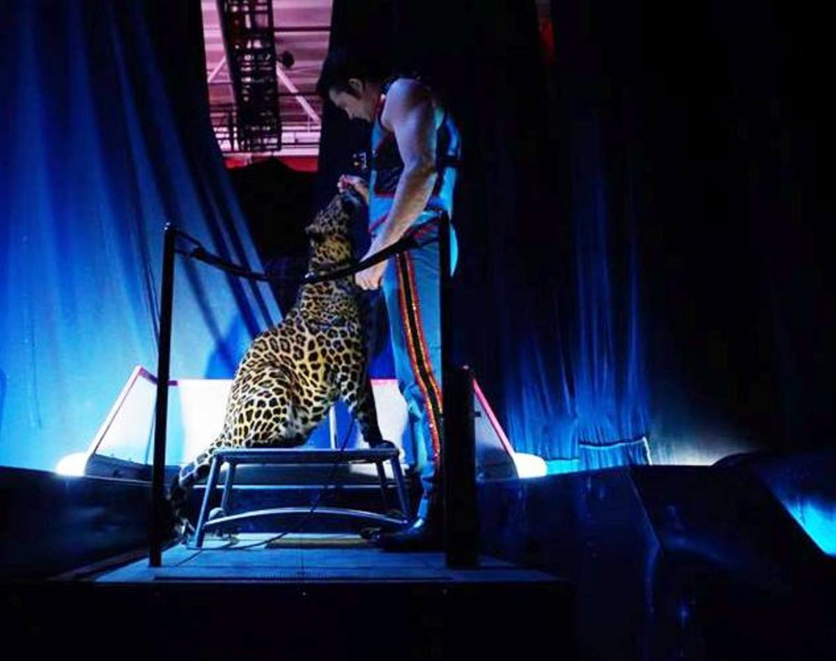 Alexander Lacey spends a private moment with his leopard, Mogli, before their entrance in the opening spectacle.  Ringling Bros. and Barnum & Bailey presents Out Of This World (2016-2017)