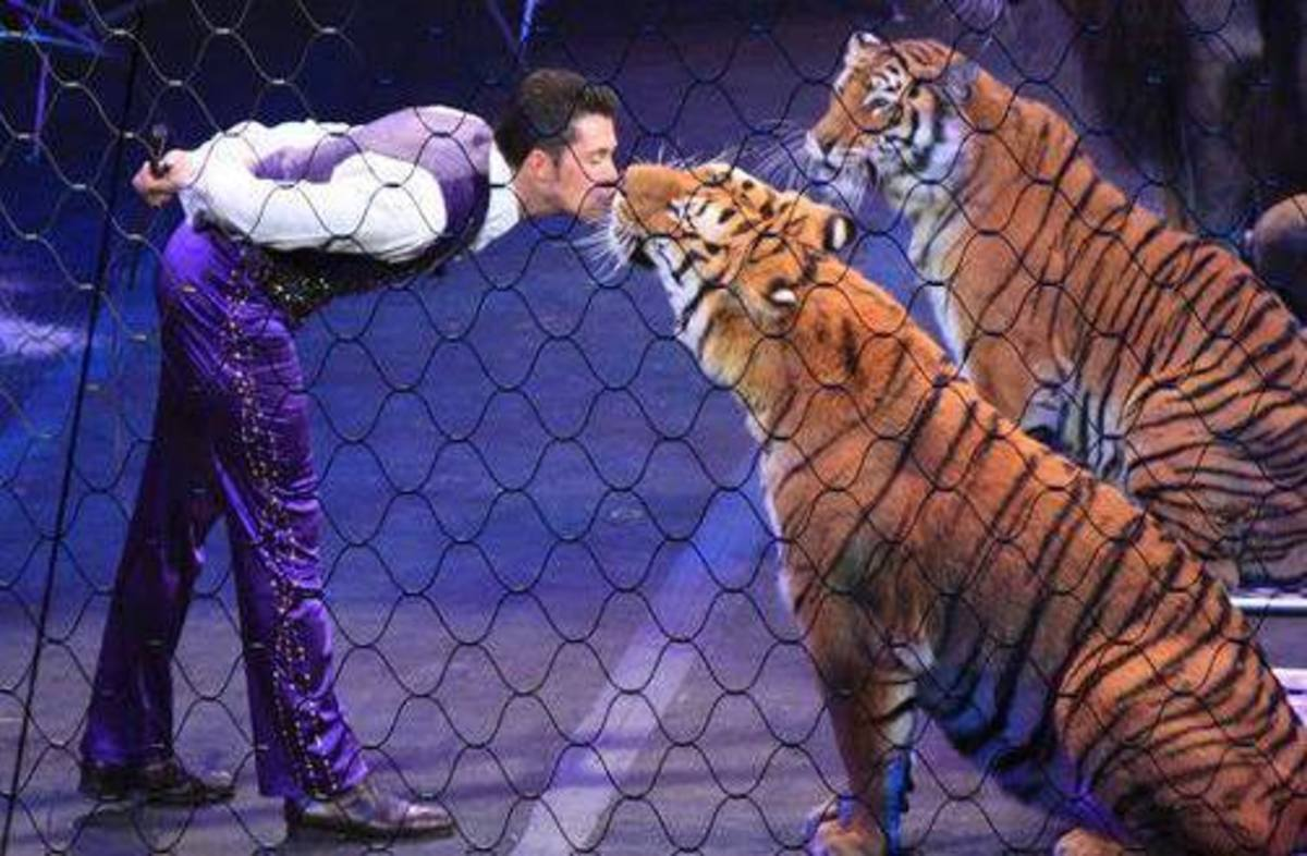 Alexander Lacey with some affectionate felines! Ringling Bros. and Barnum & Bailey presents Dragons (2012-2014)