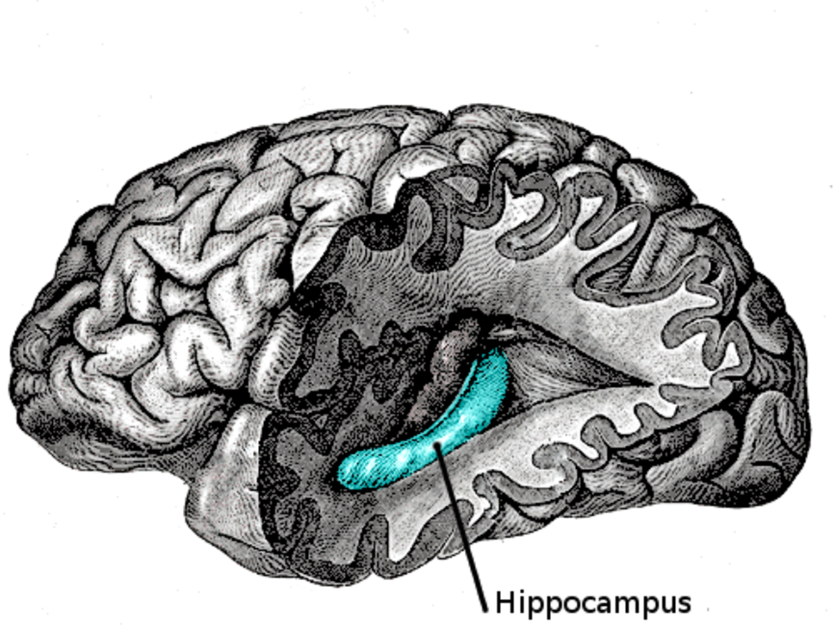 The Hippocampus is a structure in the mid-brain area that has a number of different roles, including in imagination.
