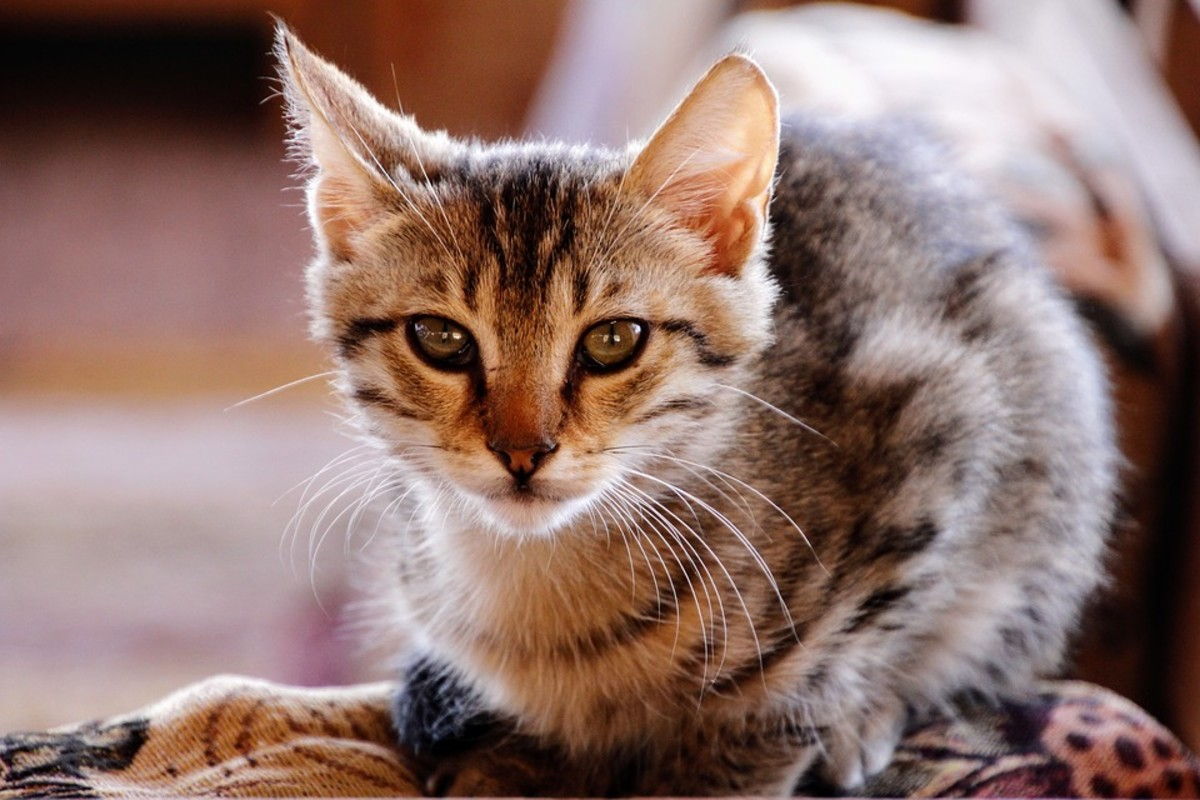 Awww, cute kitten alert! Keep reading for information on how to decode your fur baby's body language.
