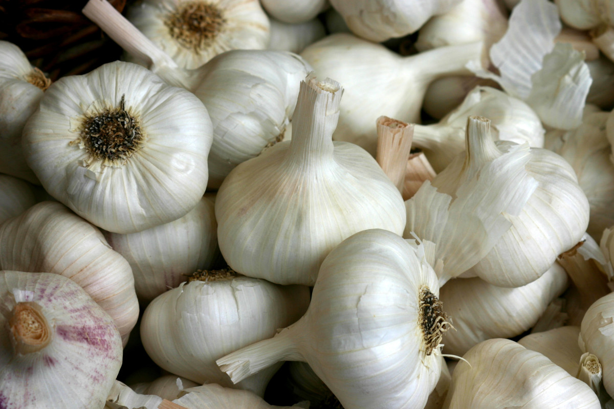 Garlic contains infection fighting properties and is effective against earaches.