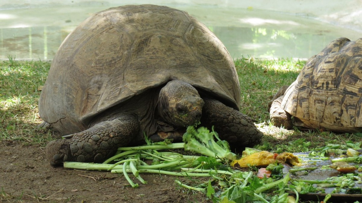 Healthy turtle meal