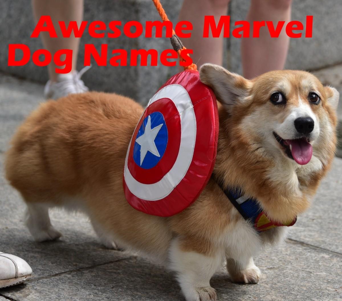 Awesome Marvel dog names.
