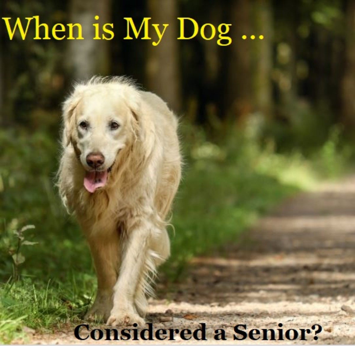 what is considered a senior dog
