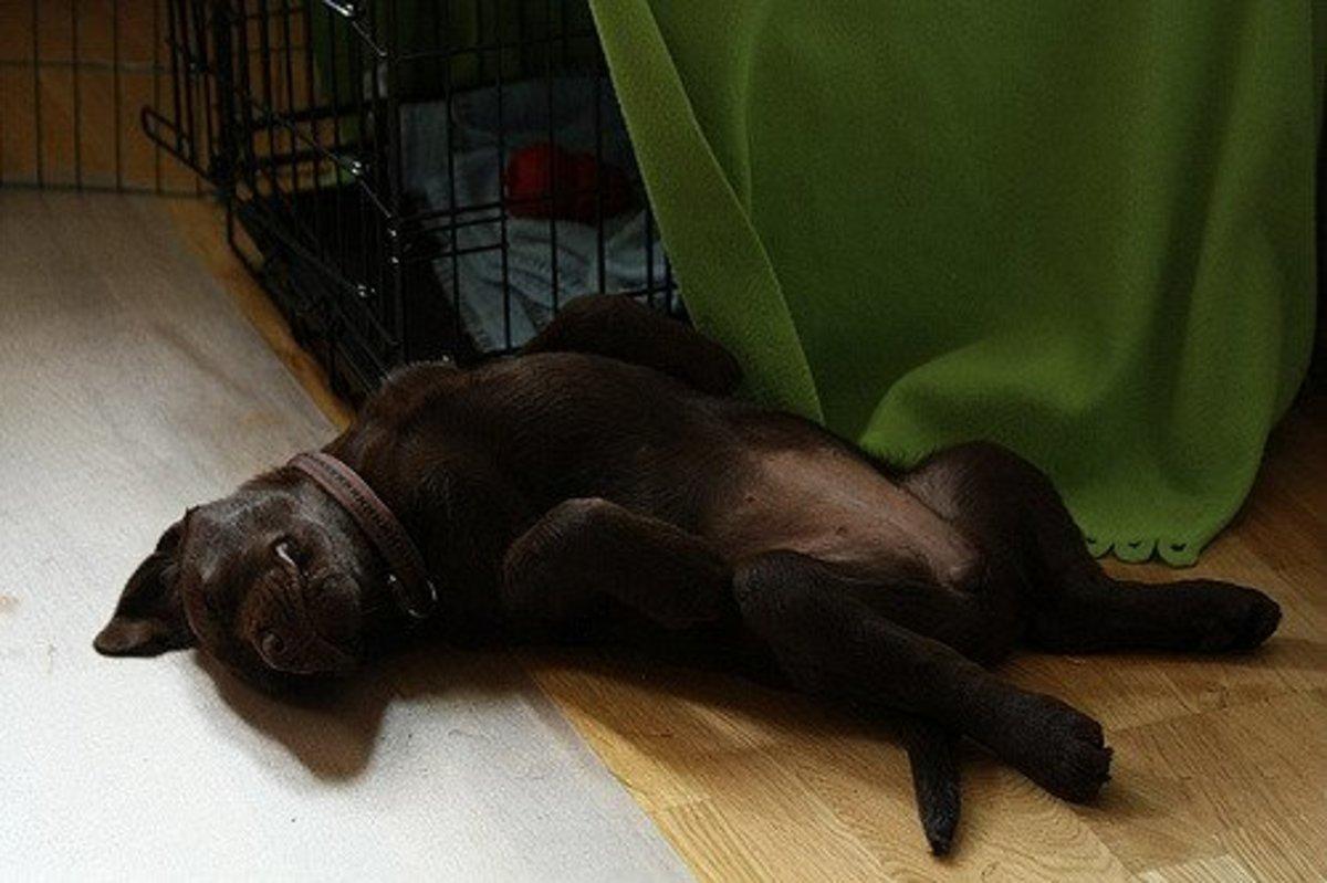 Tips to Help Your Dog Sleep Through the Night