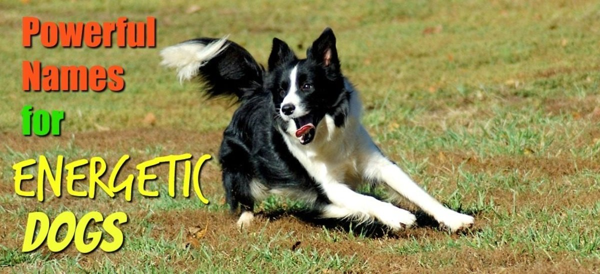 100 Powerful Names for Energetic Dogs
