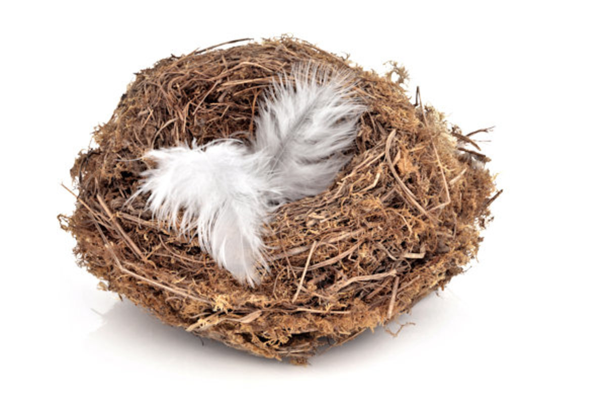 Empty Nest, Not Empty Life