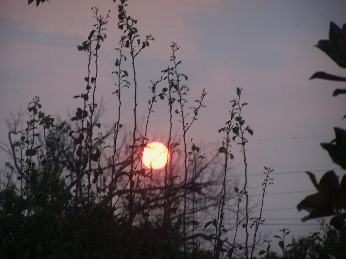 light-of-the-moon-blues