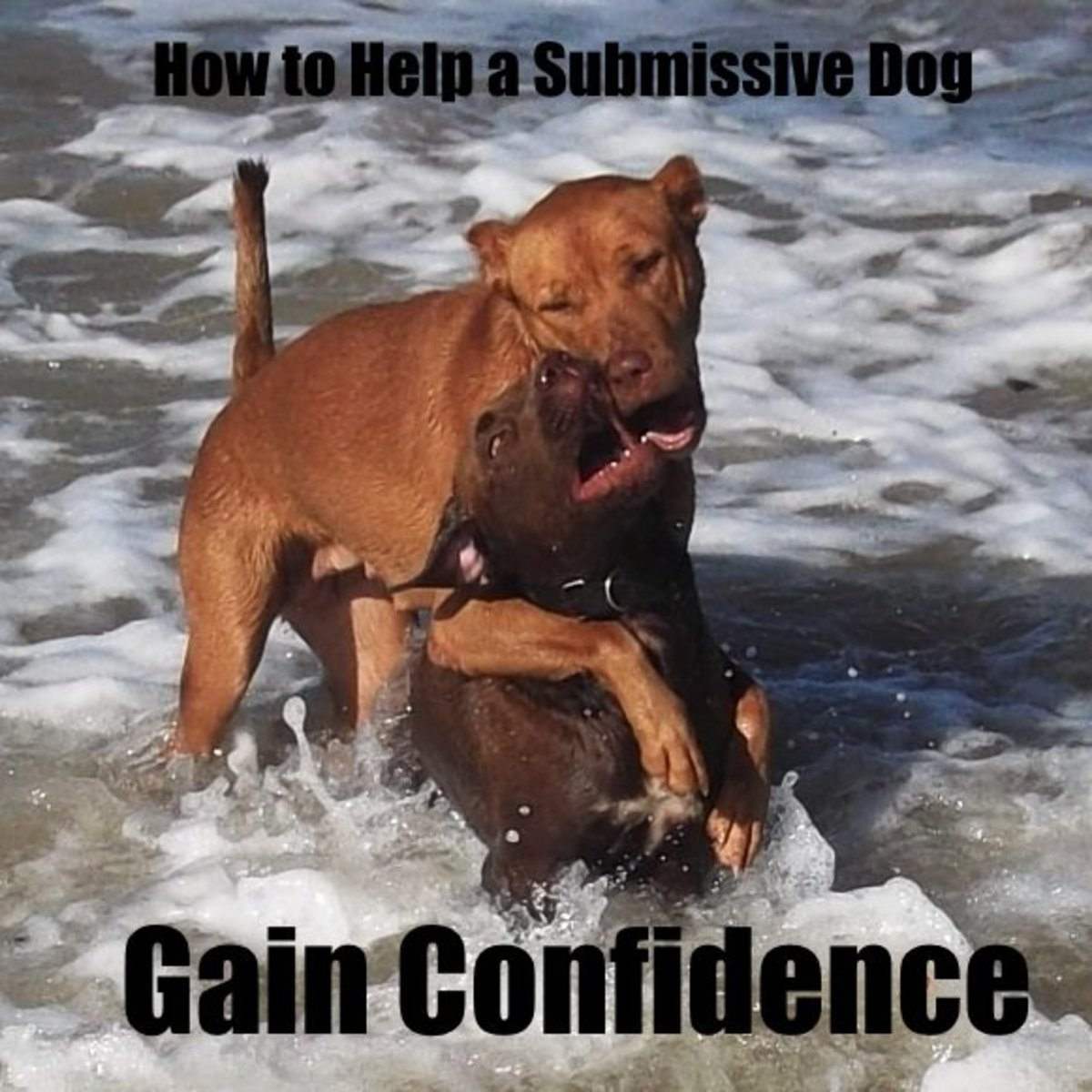 How to help a submissive dog build confidence.