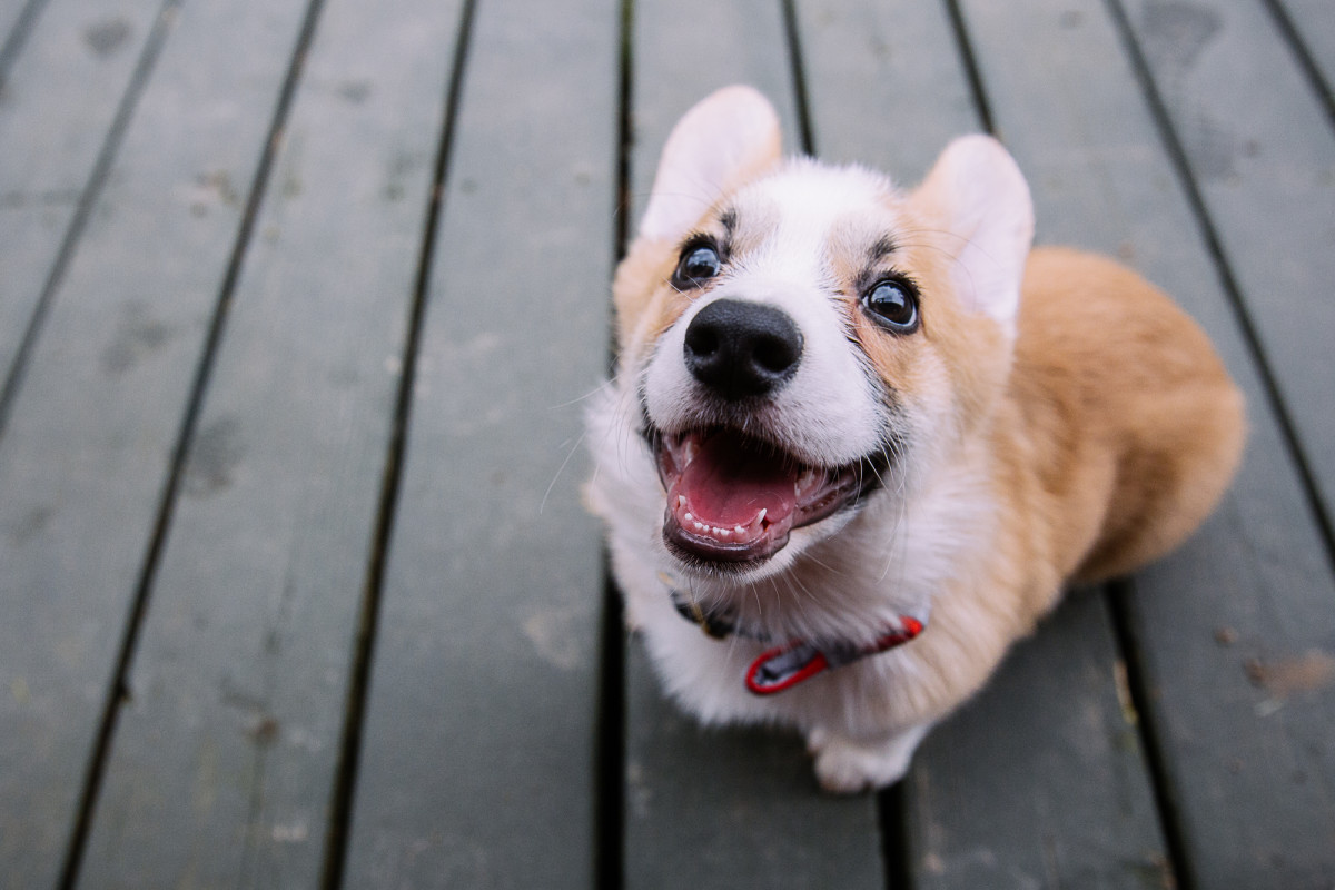 Must-Have Items When Getting a Puppy