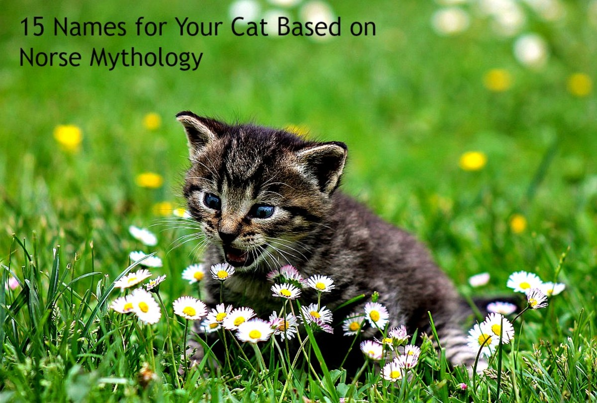 15 Names for Your Cat Based on Norse Mythology