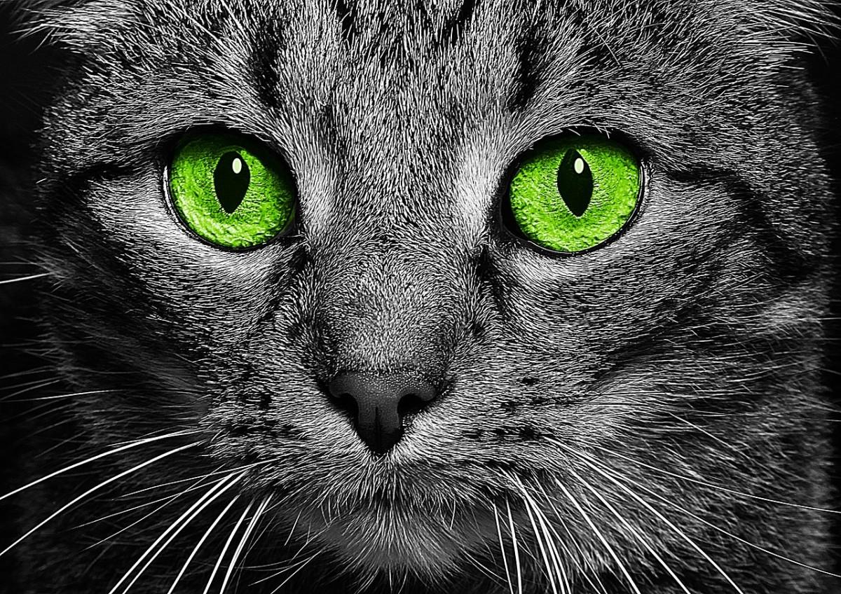 Elegy to a Feline Companion