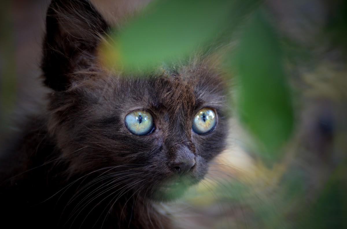 A lonely black kitten.