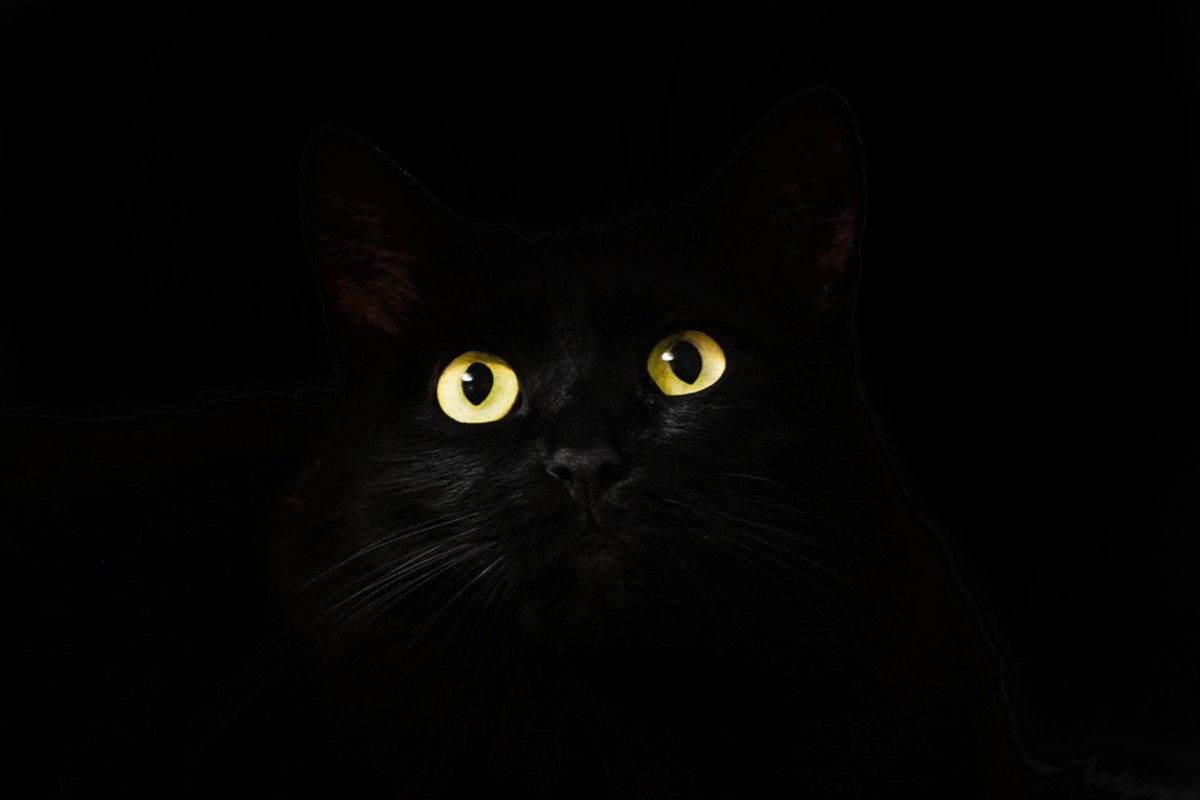 The Black Cat: A 100 Word Microfiction Short Story