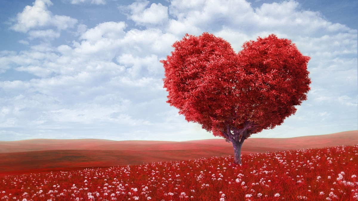 Valentine's Day Affections: My Valentine's Day Fails in High School