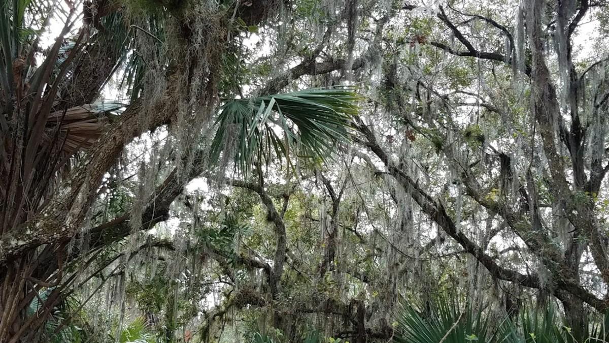 Halpatiokee Regional Park, Florida