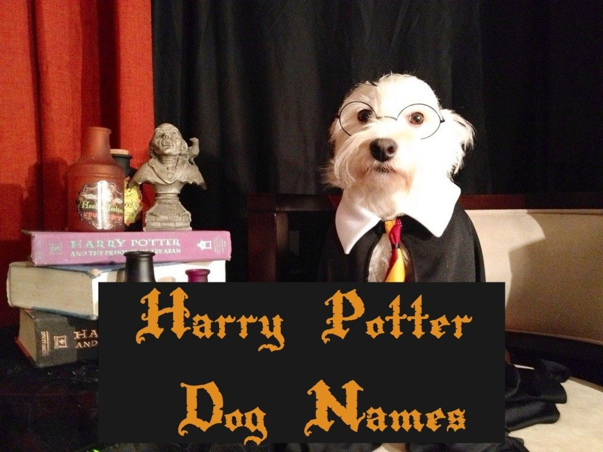 The Ultimate List of Harry Potter Dog Names