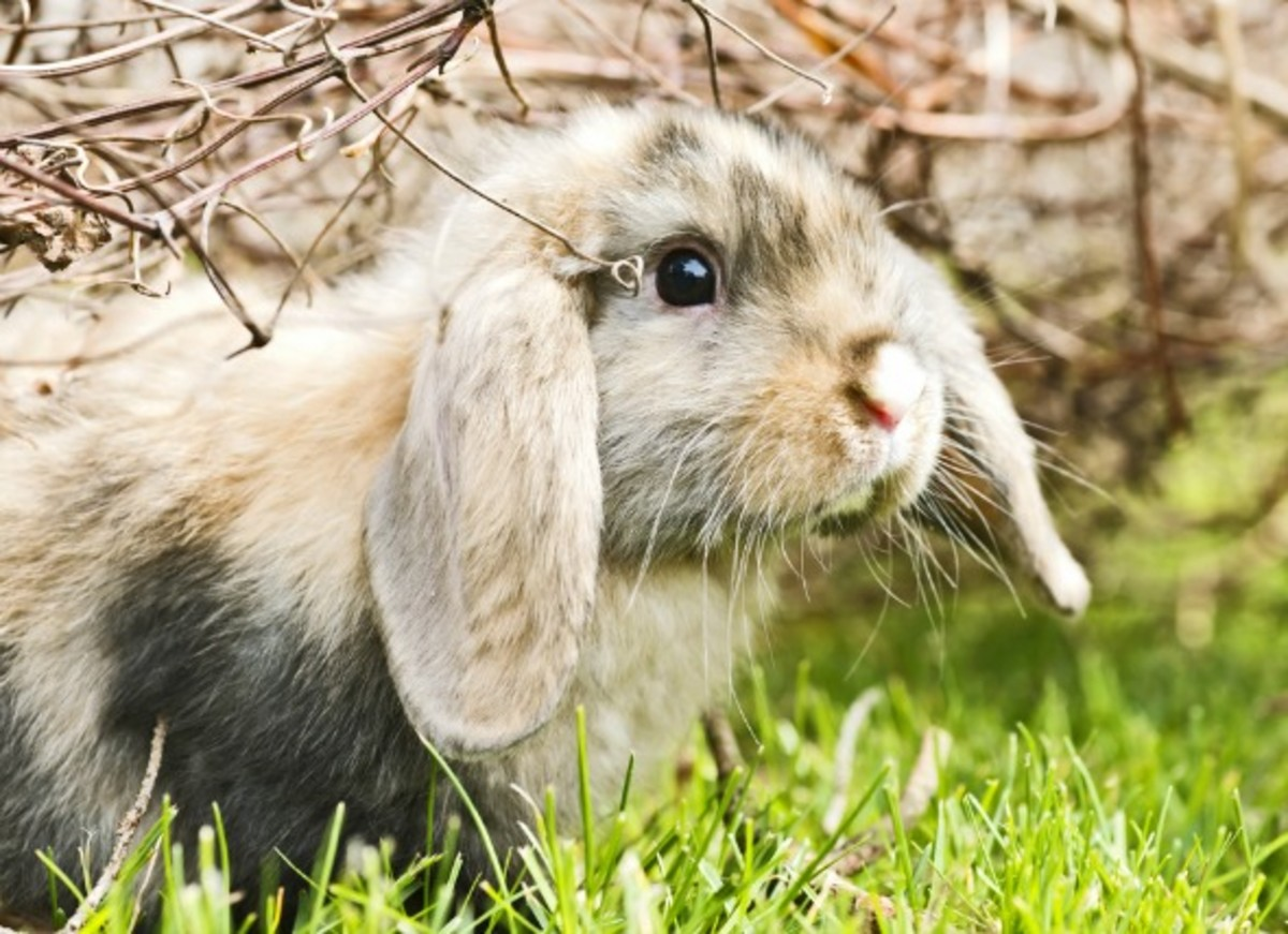 Tips for Choosing a Name for Your Pet Rabbit